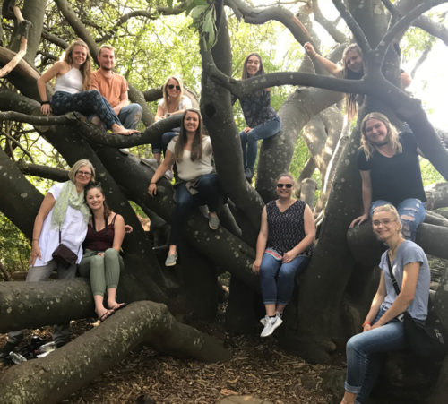 undergraduate social work students in a tree